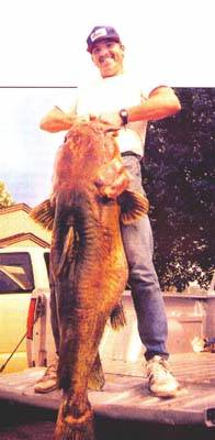 Big fish caught world records ken paulie elk city reservoir kansas world record flathead sciox Image collections